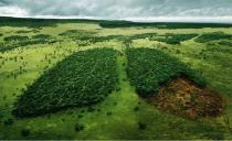 L'Italia vieta il legno illegale