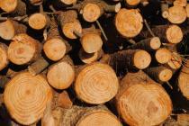 commercio-legname-illegale-no-grazie